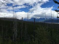 Burnt Trees, Glacier National Park, Montana