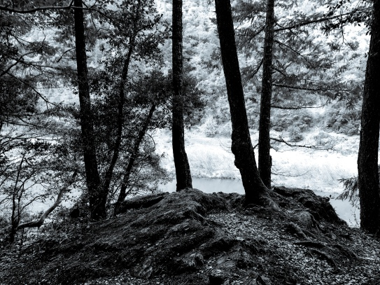 Black And White Trees Along River