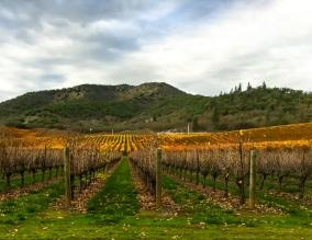 Del Rio Vineyard, Gold Hill, Oregon